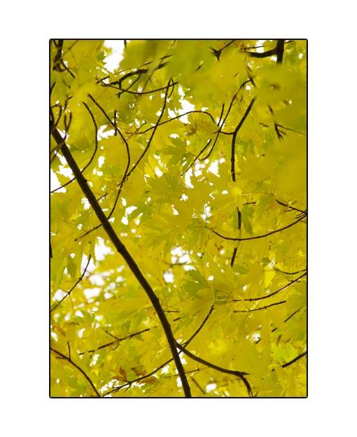 fall1532.jpg