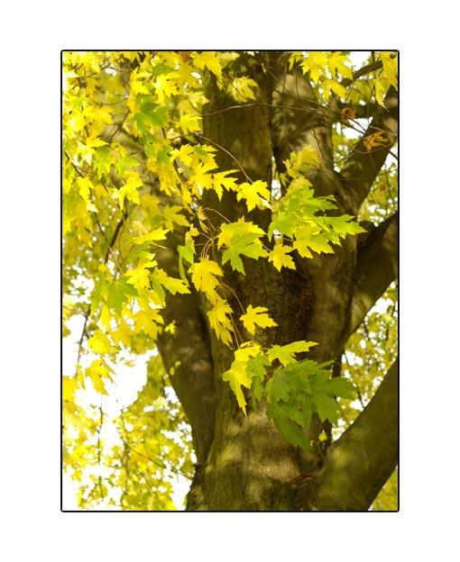 fall1542.jpg