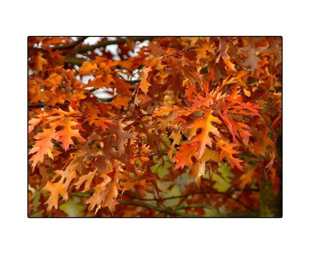 fall1551.jpg