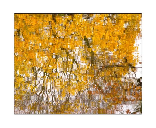 fall1559.jpg