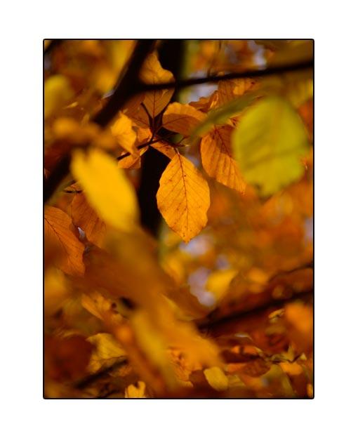 fall1633.jpg