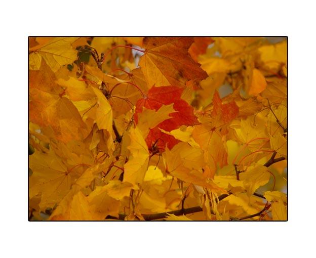 fall1636.jpg