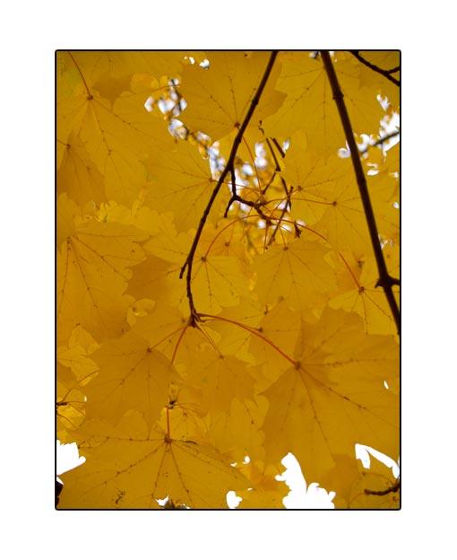 fall1661.jpg