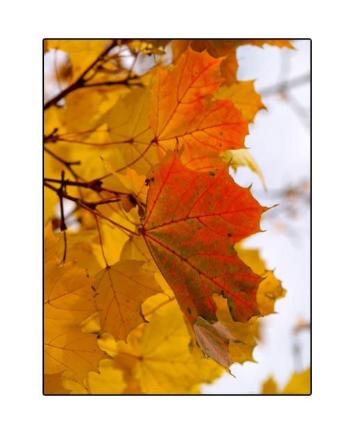 fall1667.jpg