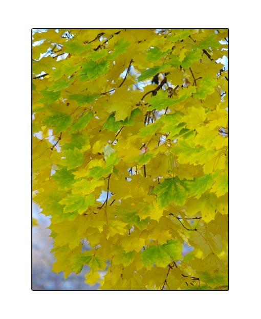 fall1671.jpg