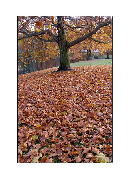 fall1697.jpg