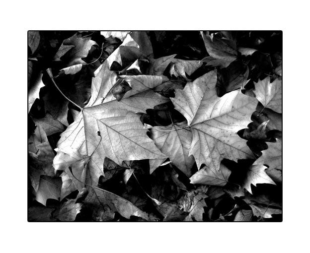 fall1700.jpg