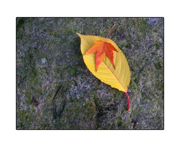 fall1726.jpg
