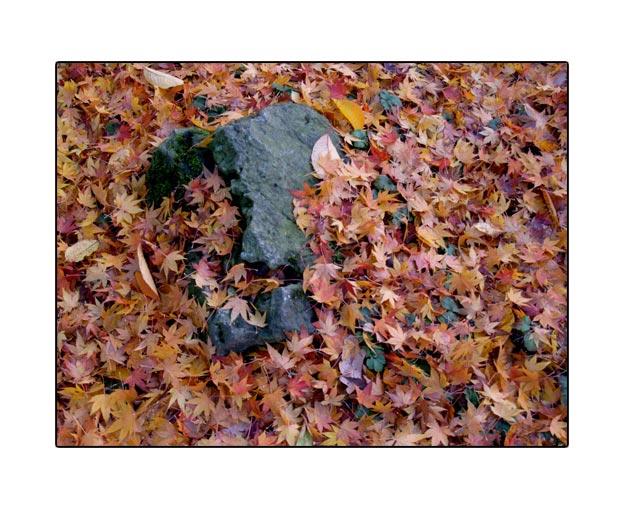 fall1727.jpg