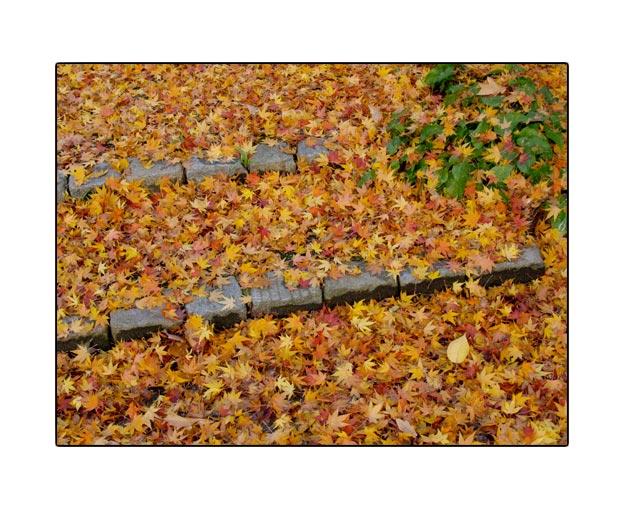 fall1729.jpg