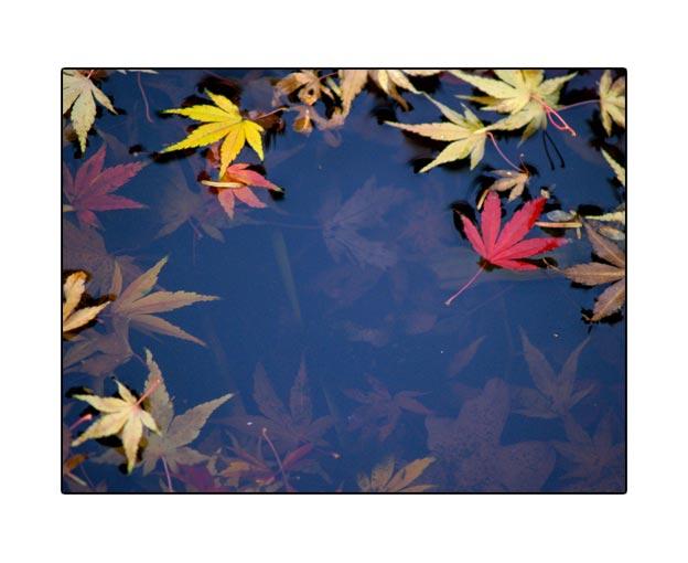 fall1756.jpg
