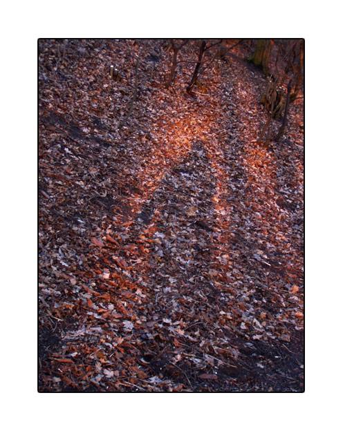 shadow01.jpg