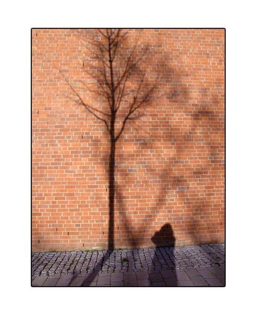 shadow19.jpg